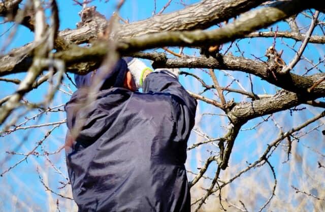 木の手入れをする人の後ろ姿