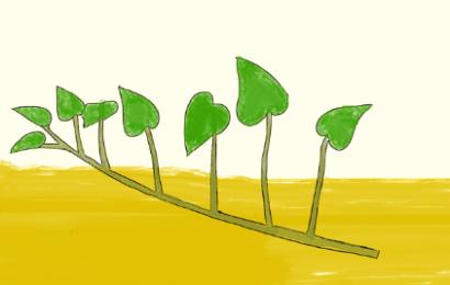 さつまいもの植え方、斜め植え