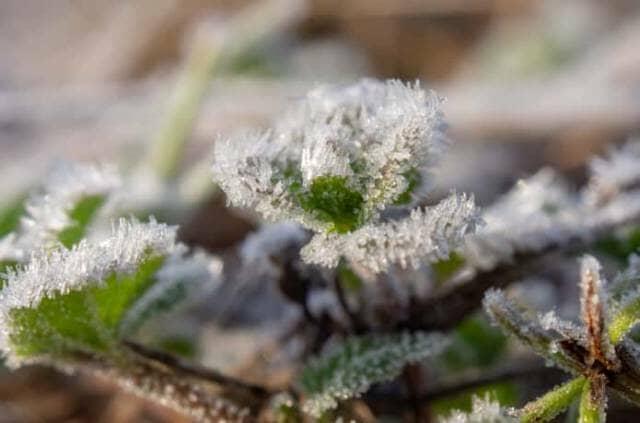 霜が付いた植物