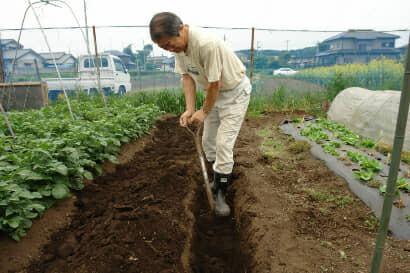 堆肥を入れるために畝に溝を掘る