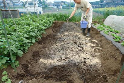 ぼかし肥料と草木灰を畑にまく