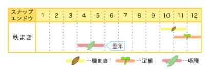 スナップエンドウの栽培カレンダー
