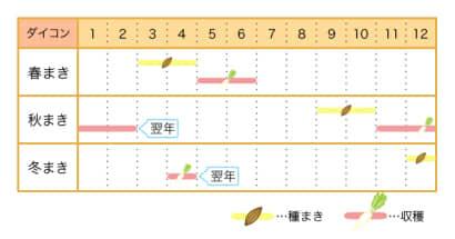 家庭菜園カレンダー ダイコン