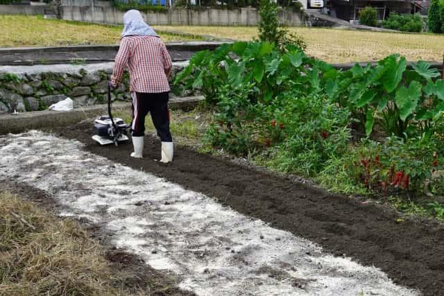畑仕事をする女性