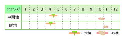 ショウガ 新規就農レッスン 栽培カレンダー