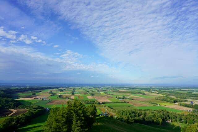 広い畑の風景
