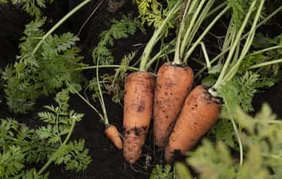 有機栽培で育てた野菜