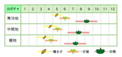 カボチャ 新規就農レッスン 栽培カレンダー