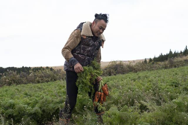 にんじんを収穫する鳥越靖基さん