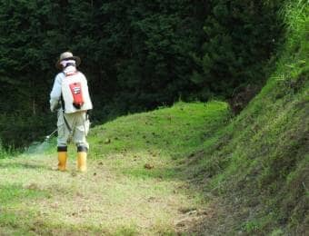 農薬散布器具を背負って農薬を散布している