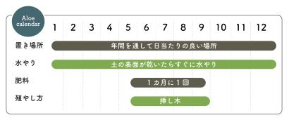アロエの栽培カレンダー