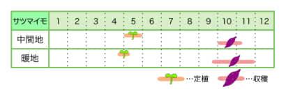 サツマイモ 新規就農レッスン 栽培カレンダー