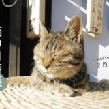 猫の日特集バナー