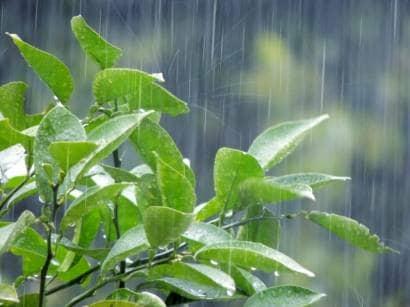 葉に落ちる雨