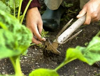 家庭菜園の雑草処理