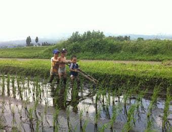 田んぼで手伝いをする子ども達