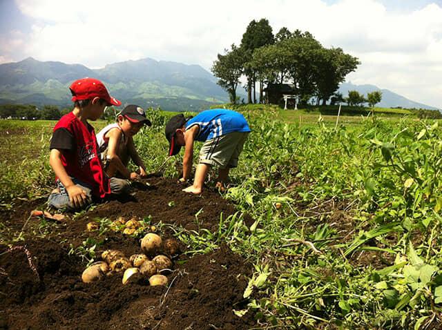 畑でじゃがいものを収穫する子どもたち