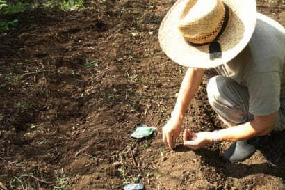 エダマメの種を畑にまく