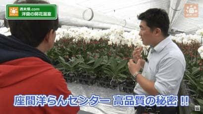 胡蝶蘭の仕立て方の動画