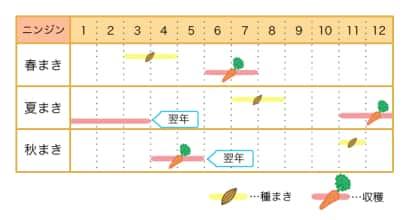ニンジン栽培カレンダー