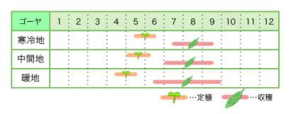 ゴーヤ 新規就農レッスン 栽培カレンダー
