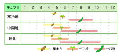 キュウリ 新規就農レッスン 栽培カレンダー