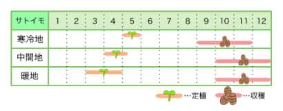 サトイモ 新規就農レッスン 栽培カレンダー
