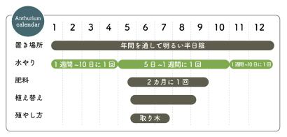 アンスリウム栽培カレンダー
