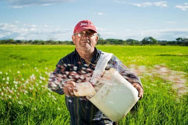 農家 水稲