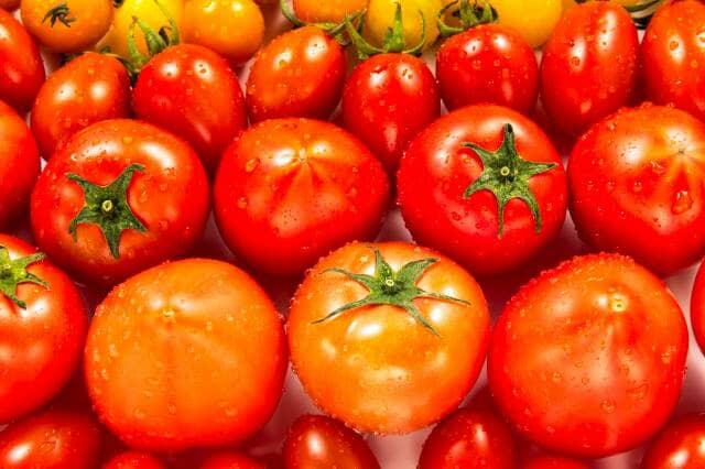 いろんなトマト
