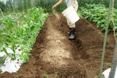 ゴマ栽培の土の準備