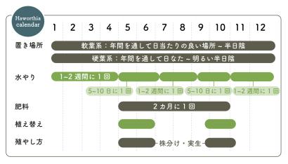 ハオルチアの栽培カレンダー