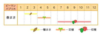 家庭菜園カレンダー_ピーマン_パプリカ