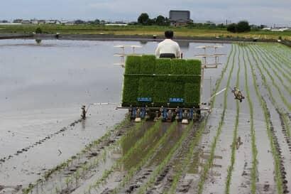 マーカーで跡をつける田植え機