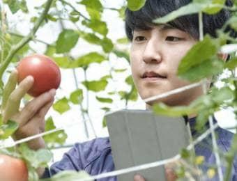 トマトを手に取る男性