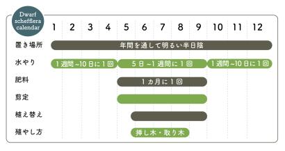 シェフレラの栽培カレンダー