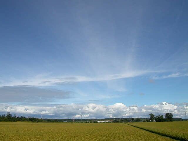 米収穫の適期
