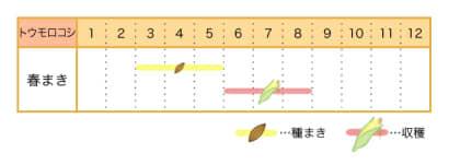 家庭菜園カレンダー トウモロコシ
