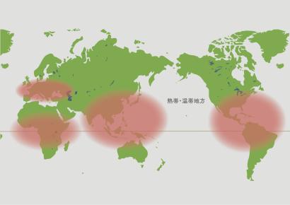 シェフレラの原産地地図