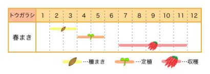 家庭菜園カレンダー トウガラシ
