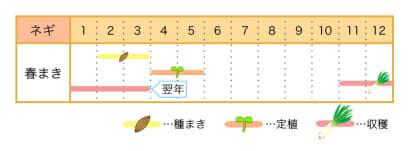 家庭菜園カレンダー ネギ