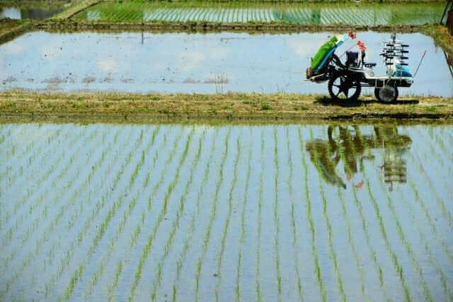 米作りの田植え作業