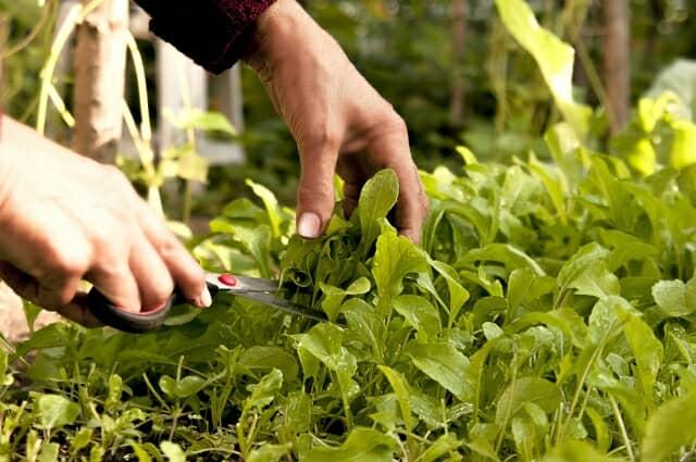 野菜を摘む手