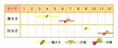 ビーツ 栽培カレンダー