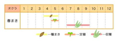家庭菜園カレンダー オクラ