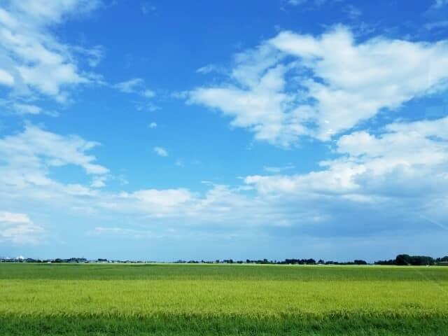 病害虫の発生していない圃場と気持ちの良い青空