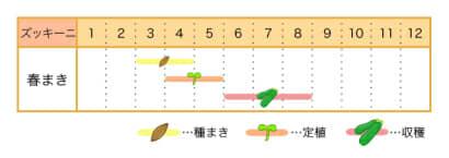 家庭菜園カレンダー ズッキーニ