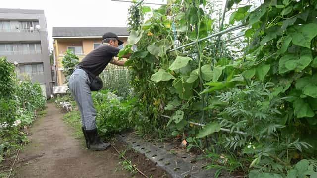 7月の菜園の様子