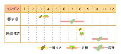 インゲンの栽培カレンダー