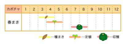 カボチャの栽培カレンダー 春まき